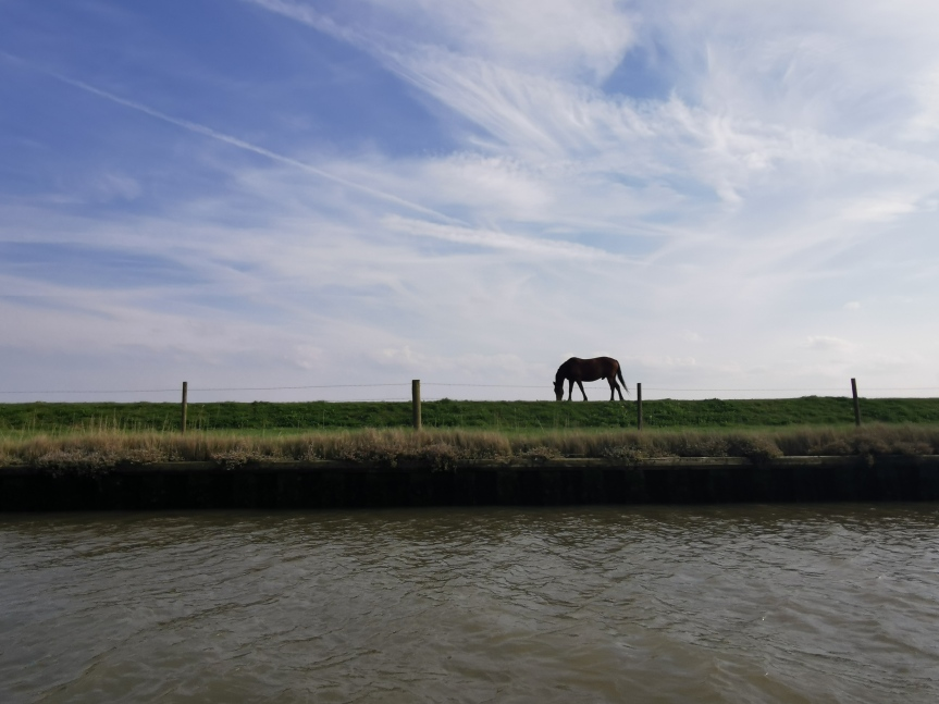 Throwback Thursday: Norfolk Broads Day 4 –Postwick Wharf to Acle Bridge Inn